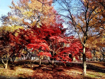 Photograph - Bright Red Autumn Tree by Susan Savad
