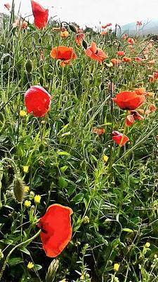 Photograph - Bright Red Cheery Poppies by Dorothy Berry-Lound