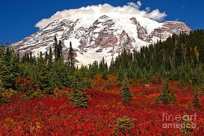 Photograph - Bright Red In Paradise Valley by Adam Jewell