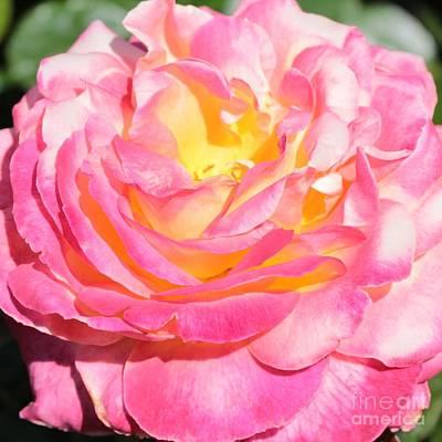Photograph - Bright Rose by Carol Groenen