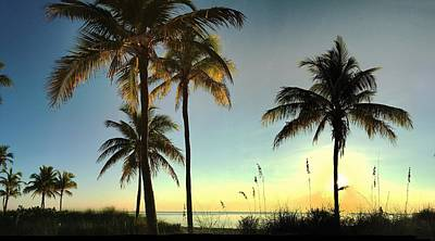 Photograph - Bright Sunshine Greets The Palms by Andrew Royston