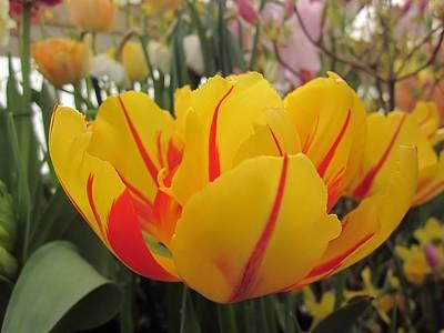 Bright Tulip Art Print