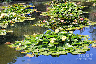 Green Photograph - Bright Water Lily Pond by Carol Groenen