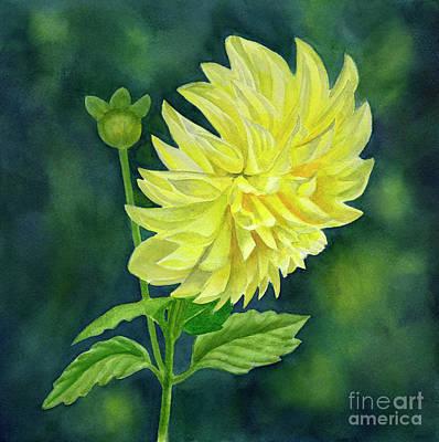 Bright Yellow Dahlia Flower With Dark Background Original
