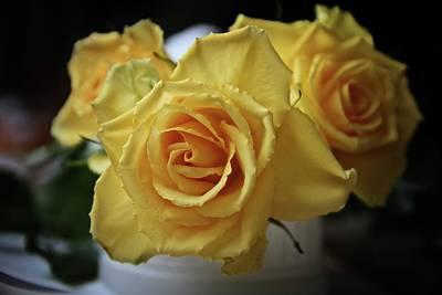 Photograph - Bright Yellow Roses by Katie Wing Vigil