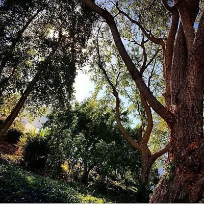 Photograph - Brighten by Simenona Martinez