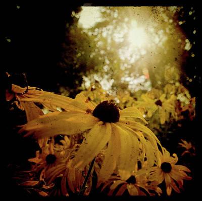Photograph - Brighten Up by Joel Witmeyer
