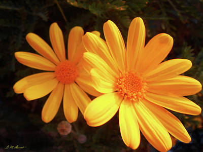 Photograph - Brighten Your Day by Michael Durst