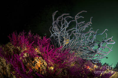 Brightly Colored Soft Coral, Dibba Art Print by Mathieu Meur