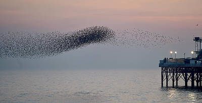 Birds In Flight At Night Photograph - Brighton Starling Murmuration by Simon Dack