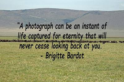 Photograph - Brigitte Bardot Quote by Tony Murtagh