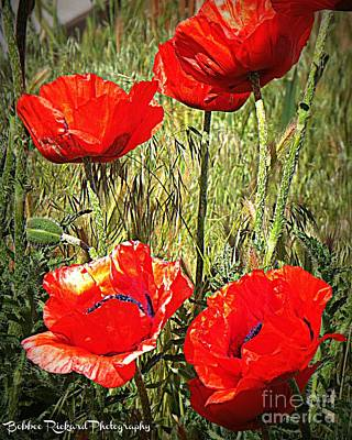 Photograph - Brillaint Poppies by Bobbee Rickard