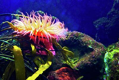 Photograph - Brilliant Coral Anemone by Kirsten Giving