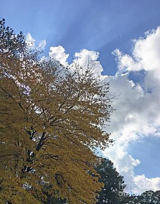 Photograph - Brilliant Fall Leafmore by Lizi Beard-Ward