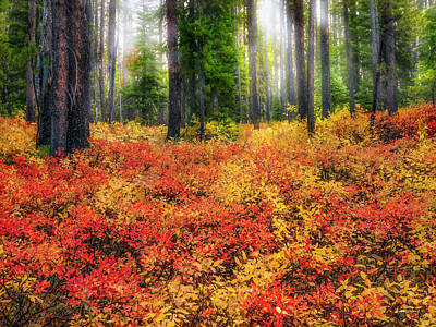Photograph - Brilliant Forest Serenity by Leland D Howard