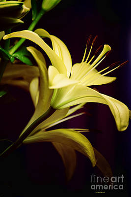 Photograph - Brilliant Lily by Roberta Byram