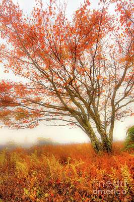 Photograph - Brilliant Orange Autumn Fall Colors Tree by Dan Carmichael