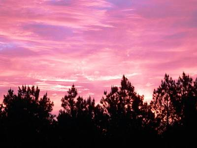 Photograph - Brilliant Pink Morning Georgia Sky by Belinda Lee