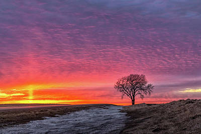 Photograph - Brilliant Skies by Penny Meyers