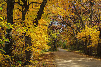 Photograph - Brilliant Yellow Country Road by Joni Eskridge