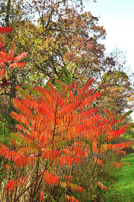 Photograph - Brilliantly Colored Sumac In Chain-o-lakes by Ray Mathis
