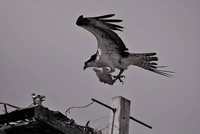 Photograph - Bringing Home Lunch by Karen Silvestri