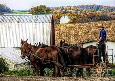 Photograph - Bringing It Home In Lancaster County, Pennsylvania by Polly Peacock
