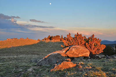 Photograph - Bristecone Sunset And Moonrise On Mt. Evans by Ray Mathis