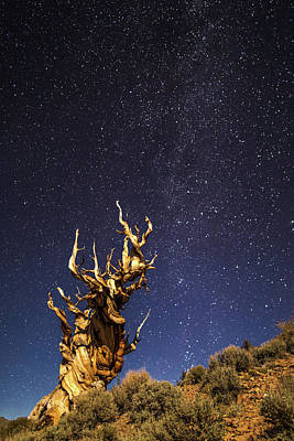 Photograph - Bristelcone Pine by Davorin Mance