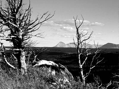 Photograph -  Bristle Cone Pines With Divide Mountain In Black And White by Tracey Vivar