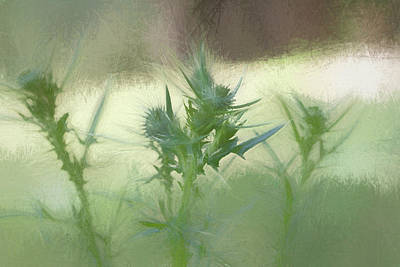 Photograph - Bristle Thistle  by Kathy Clark