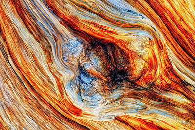 Photograph - Bristlecone Abstract by Rick Furmanek