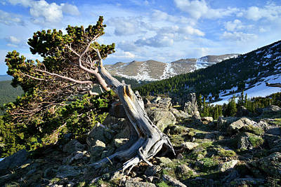 Photograph - Bristlecone Highway In Colorado by Ray Mathis