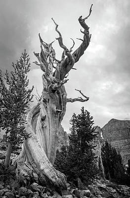 Photograph - Bristlecone Pine by Johnny Adolphson