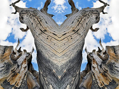 Photograph - Bristlecone Pine Nevada Mirror by Kyle Hanson
