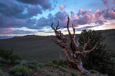 Photograph - Bristlecone Pine Sunset 2 by Scott Cunningham