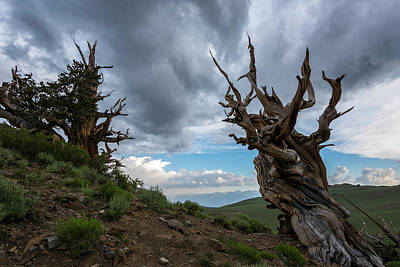 Photograph - Bristlecone Pines Storm Clouds by Scott Cunningham