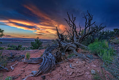 Bristlecone Sunset Art Print by Rick Berk