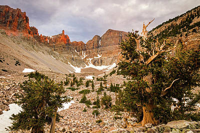 Photograph - Bristlecones On Wheeler Peak. by Johnny Adolphson