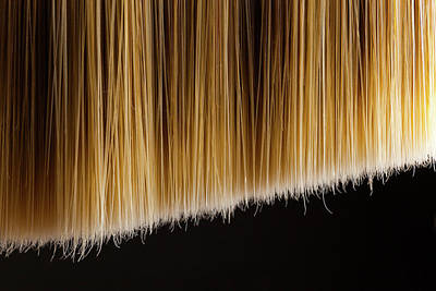 Photograph - Bristles by SR Green