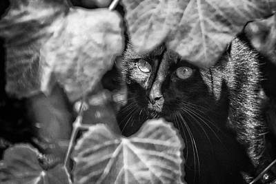 Photograph - Brita's Cat Bw by Belinda Greb