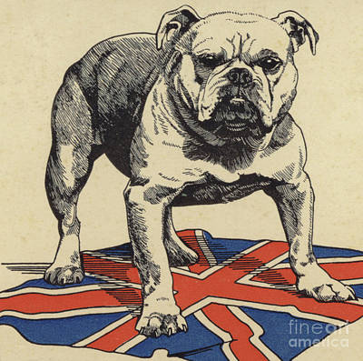 English Drawing - British Bulldog Standing On The Union Jack Flag by English School