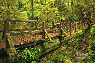 Photograph - British Columbia Rainforest Bridge by Adam Jewell