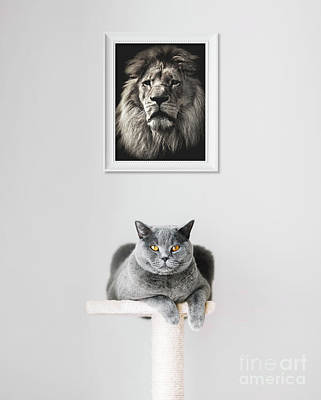 Photograph - British Shorthair Cat And Lion Portrait Above. by Michal Bednarek