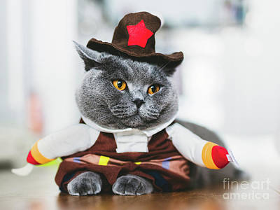 Photograph - British Shorthair Cat Wearing A Funny Costume by Michal Bednarek
