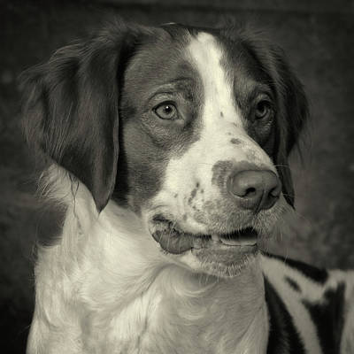 Photograph - Brittany In Black And White by Greg Mimbs