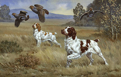 Brittany Photograph - Brittany Spaniels Flush Three Birds by Walter A. Weber