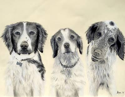 Brittany Spaniel Drawing - Brittanys  by Benjamin Gassmann