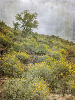 Photograph - Brittlebush Wildflowers by Tamara Becker