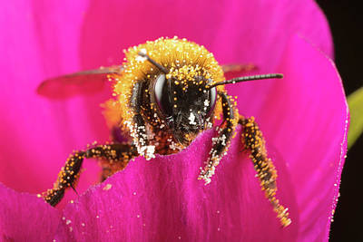 Photograph - Bro Got Any Pollen by Brian Hale